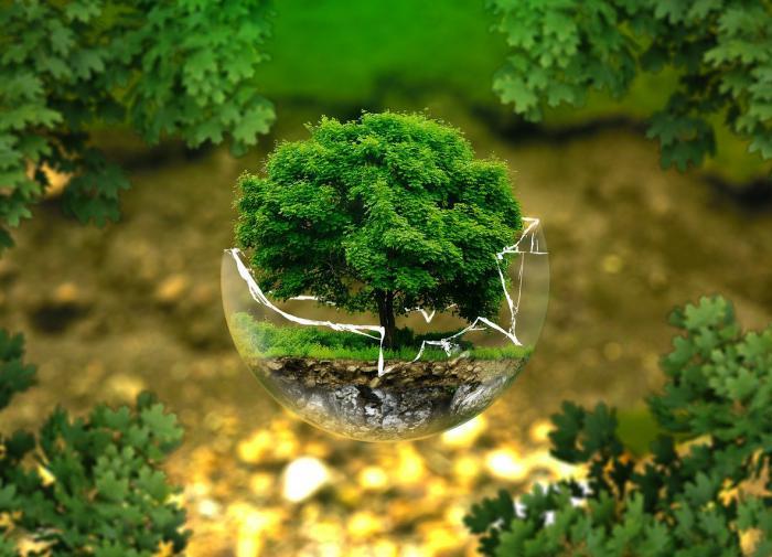 Люди влияют на природу уже 12 тысяч лет