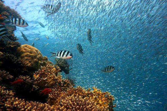 Морские обитатели защищают людей от миллионов вирусов