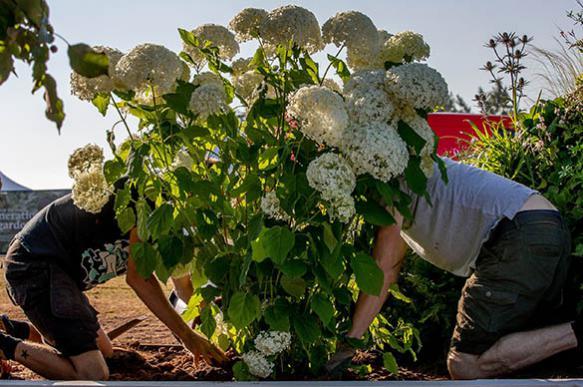 Эксперт назвал полезные растения для дачи и квартиры