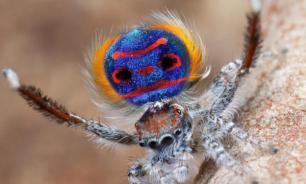 Специалисты создали сверхкомпактную 3D-камеру на основе зрения пауков