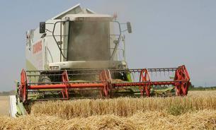 В России скопились излишки пшеницы