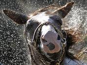 """Преступников """"сдала"""" собственная лошадь"""