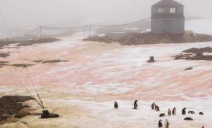 Снег в Антарктиде окрасился в зелёный и розовый цвета