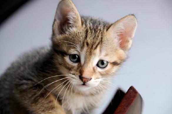 """""""Защитнички отечества"""": подростки жарили живого котенка в духовке и снимали на видео"""