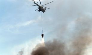 Фонд дикой природы предупредил о возможности крупных лесных пожаров