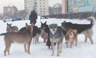 Ещё одна жертва бродячих собак: теперь в Красноярске