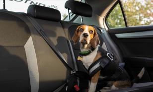 Зоопсихолог рассказал, как правильно перевозить домашних животных