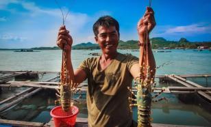 ПЛАНЕТА     ЛЮДЕЙ     Охотники за омарами