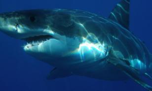 В районе пляжей США обосновались акулы-людоеды