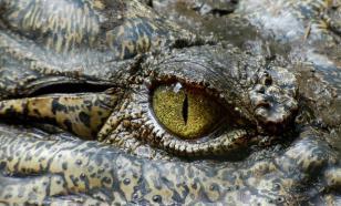 Биологи объяснили, почему у животных зрачки разной формы