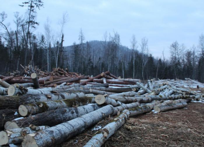 Путин объяснил депутатам, почему решил запретить вывоз леса-кругляка
