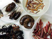 Наш новый хлеб - жуки и тараканы