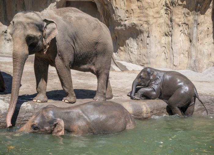 Топ-5 самых умных животных на планете