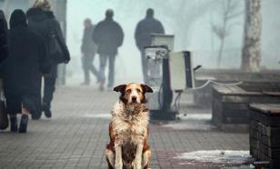 Коронавирус: пока еще рано вешать на собак