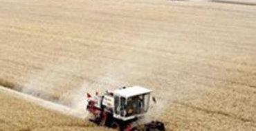 Сибири нужны спецтарифы на перевозку зерна