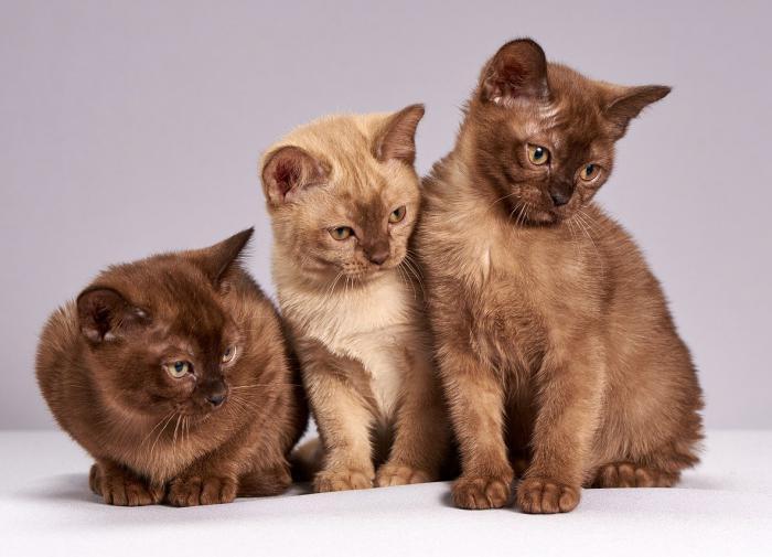 Кошки могут подражать людям — учёные