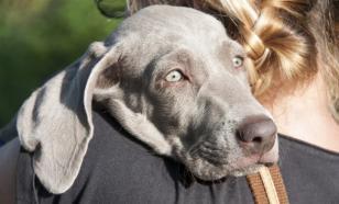 Как собаки могут помочь в борьбе с раком
