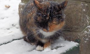 Почему линяет кошка