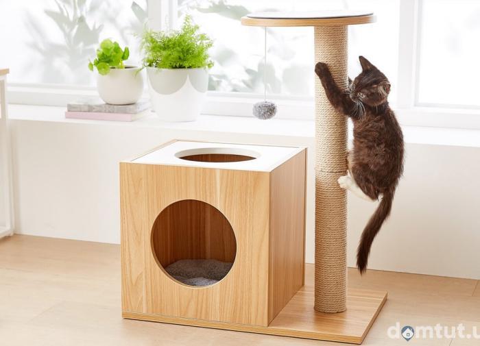 Шесть советов, как сделать жизнь вашей кошки активней