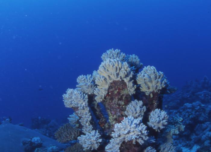 """У побережья Австралии обнаружили гигантский коралловый """"небоскрёб"""""""