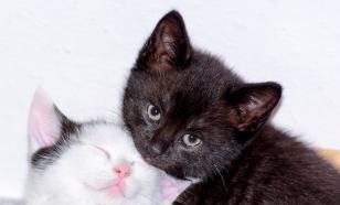 В Турции кошка принесла больных котят в ветклинику