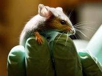 Воспитанников интерната кормили мышиными испражнениями.