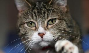 Ваш кот не представляет угрозы для вашего психического здоровья
