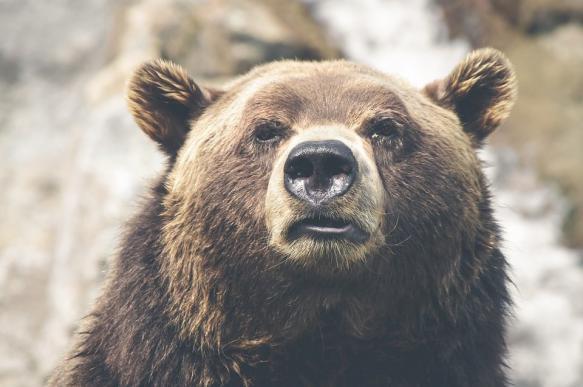 В Забайкалье медведь растерзал 50-летнюю женщину