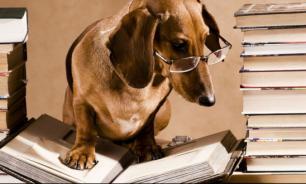 Образ собаки в русской литературе