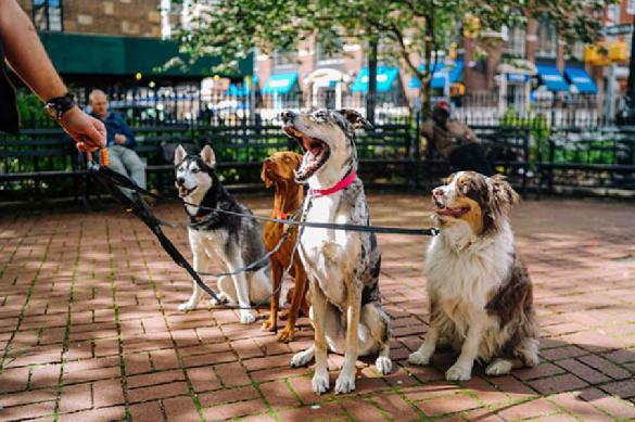 Селекция собак изменяет их мозг