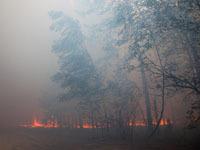 Площадь пожаров в российских лесах увеличилась в 4 раза.