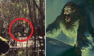 Во Флориде обнаружили легендарную скунсовую обезьяну
