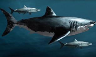 Биологи открыли новый вид акул возрастом 91 млн лет