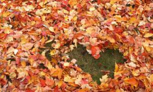 Как правильно собрать опавшие листья в саду?