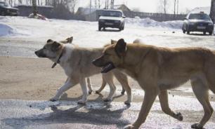 Казанские власти приняли решение усыпить всех больных бездомных собак