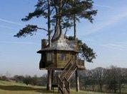 Бандиты строят деревянные небоскребы
