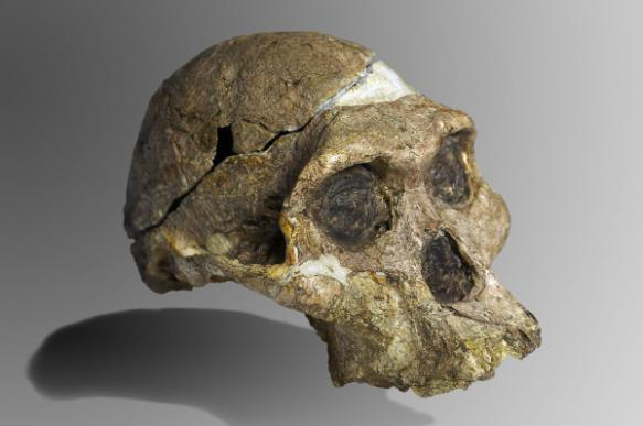 В Эфиопии обнаружили череп древнейшего вида австралопитеков