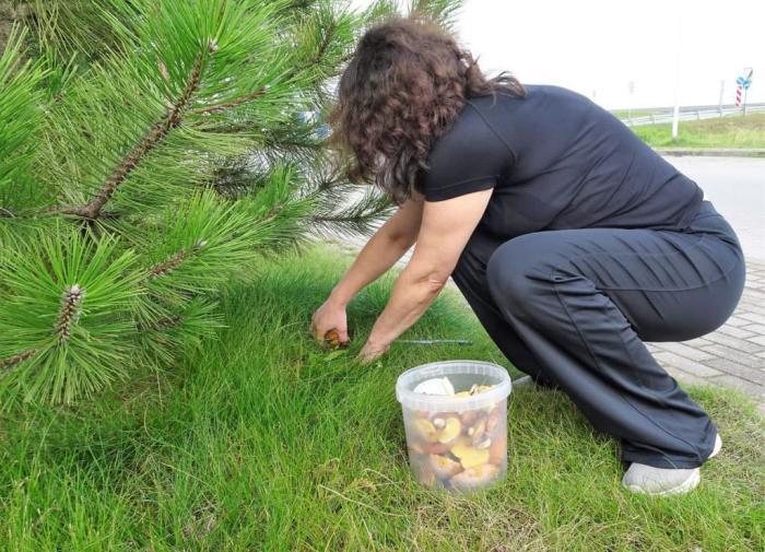 Ядовитый двойник опят: в Подмосковье супруги насмерть отравились грибами