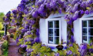 Сад мечты: модные растения для украшения