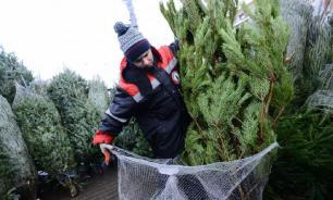 Зараженные клещами елки развезли с Урала по регионам