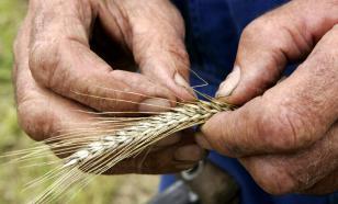 Зерновые перспективы