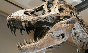 Новый вид динозавров из-за ошибки палеонтологов считали акулами