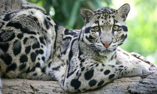 Топ вымерших животных, которых мы больше не увидим