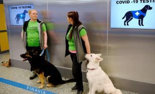 Собаки могут обнаружить коронавирус быстрее ПЦР-тестов