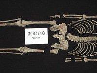 Останки легендарного гангстера найдены в Австралии.