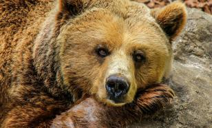 Камера засняла драку двух медведей на границе России и Китая