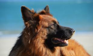 В Омске спасли собаку, которая оказалась на острове посреди Иртыша