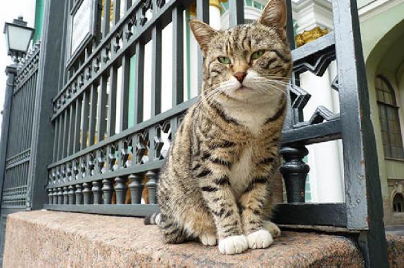 Эрмитажный кот признан лучшим оракулом ЧМ-2018