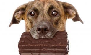 Продукты, которые не стоит давать собакам