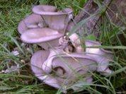 На памперсах выросли грибы...